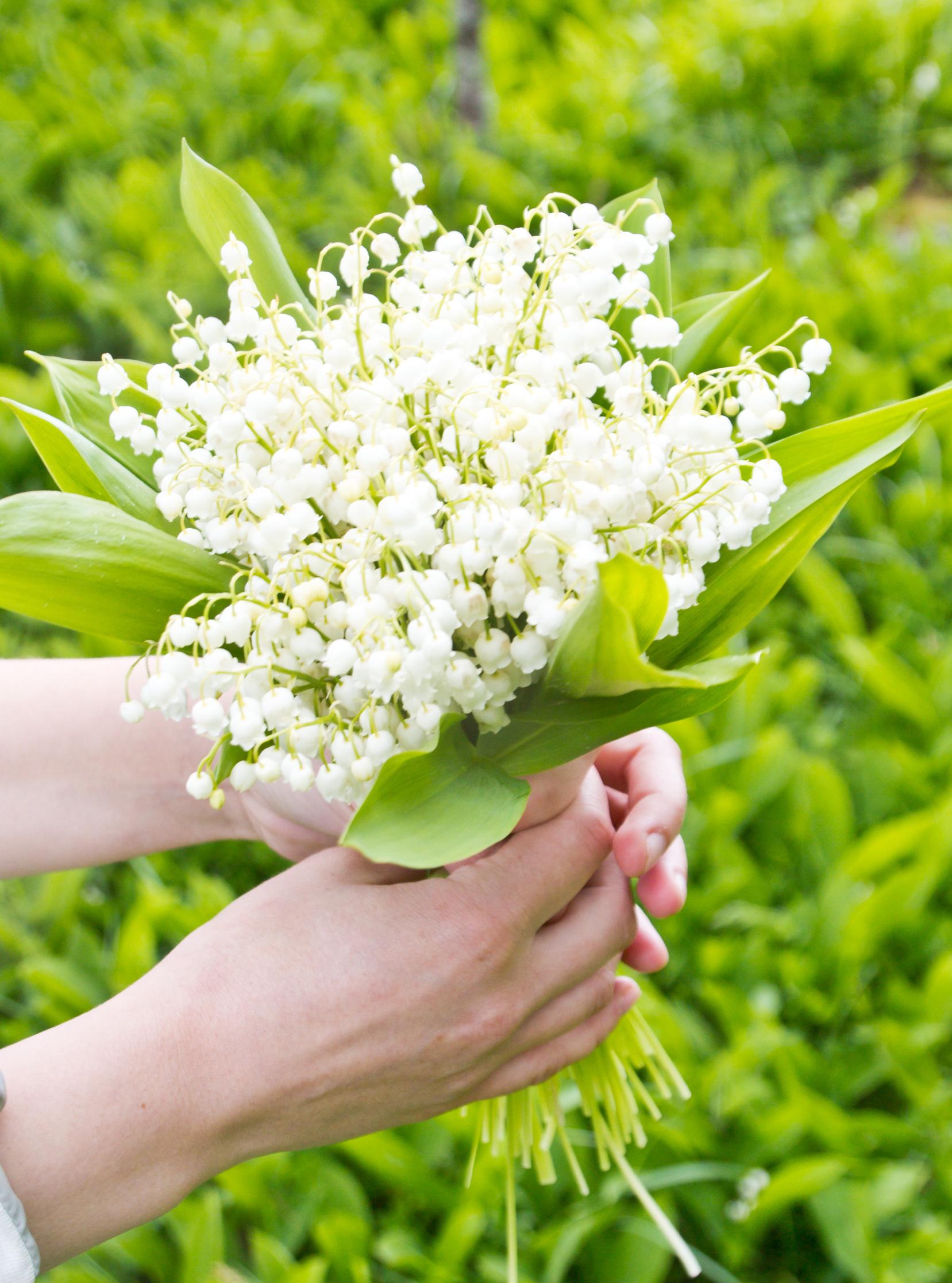 Bouquet de muguet, photo © termis1983 - Fotolia.com