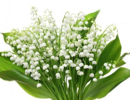 Les fleuristes peuvent ouvrir pour le 1er mai, un symbole fort et une victoire pour la filière