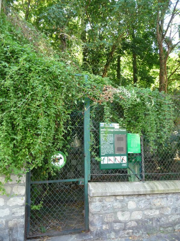 Jardin sauvage, rue Saint-Vincent, Montmartre, Paris 18e (75)