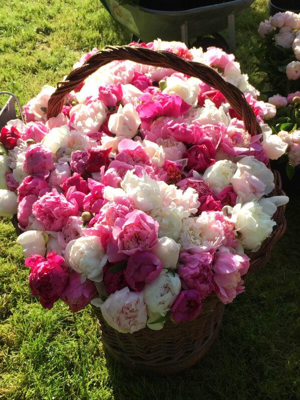 Panier de fleurs coupées de pivoines, Pivoines Rivière, Journées des Plantes, Domaine de Chantilly, Chantilly (60)