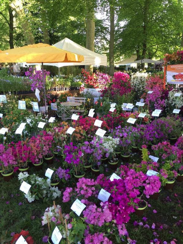 Collection de bougainvillées, Le Cannebeth, Journées des Plantes, Domaine de Chantilly, Chantilly (60)