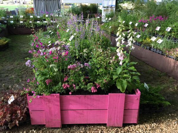 Jardinière rose, Le Châtel des Vivaces, Journées des Plantes, Domaine de Chantilly, Chantilly (60)