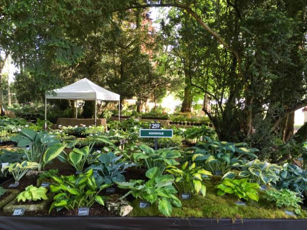 Hostafolie, Journées des Plantes, Domaine de Chantilly, Chantilly (60)