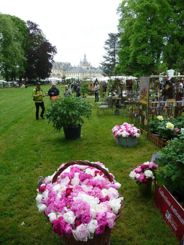 Panier et bacs de fleurs coupées de pivoines, Pivoines Rivière, Journées des Plantes, Domaine de Chantilly, Chantilly (60)