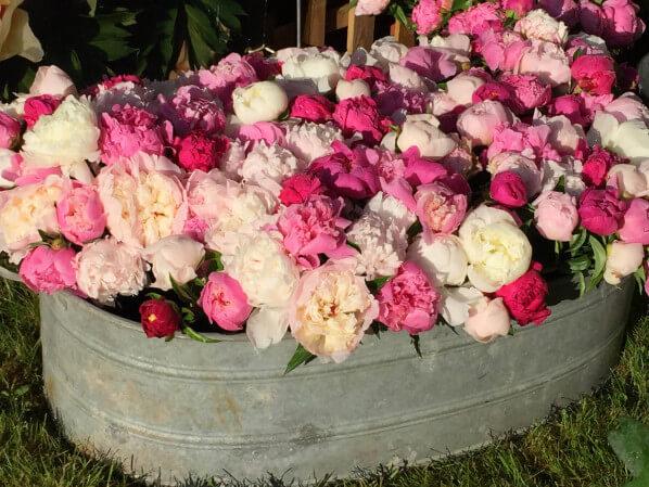 Bac de fleurs coupées de pivoines, Pivoines Rivière, Journées des Plantes, Domaine de Chantilly, Chantilly (60)