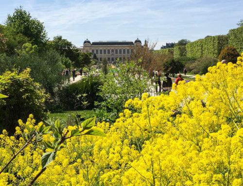Réouverture du Jardin des Plantes de Paris le vendredi 5 juin 2020