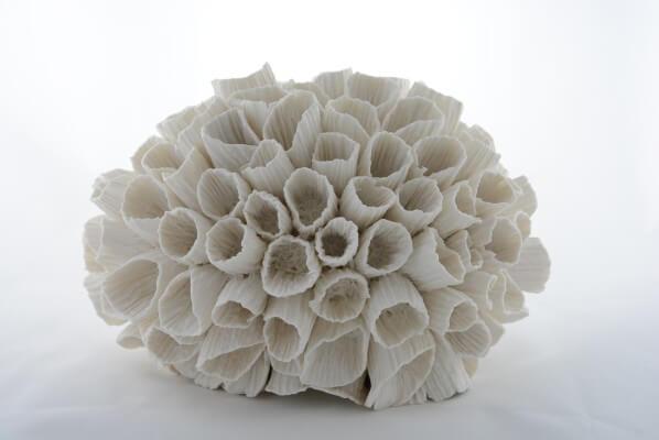 Marik Korus, Corail tubular cactus, photo JLKORUS