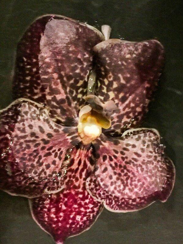 Fleur coupée d'orchidée, Vanda, composition floral, Flowertime 2017, Hôtel de ville, Bruxelles, Belgique