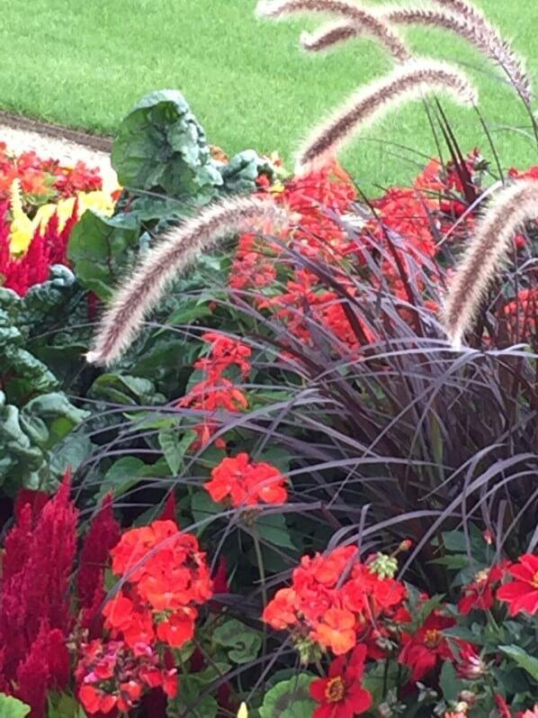 Parterre de fleurs d'été à dominante rouge, Jardin du Luxembourg, Sénat, Paris 6e (75)