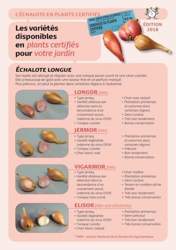Fiches des variétés certifiées d'échalotes, édition 2018, Prosemail