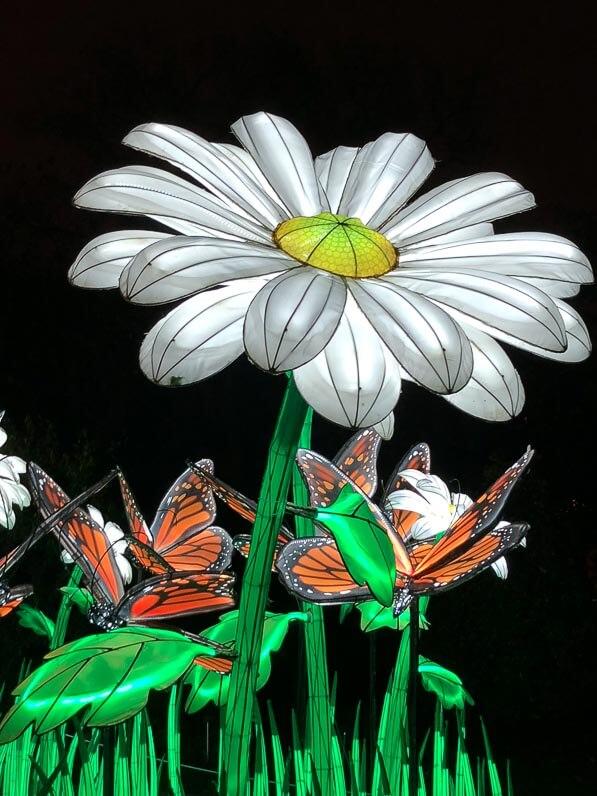 Marguerites, papillons, lanternes, Espèces en voie d'illumination, promenade nocturne, lanternes, Jardin des Plantes, Paris 5e (75)