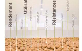 Catalogue des variétés de pomme de terre produites en France, 2018, GNIS