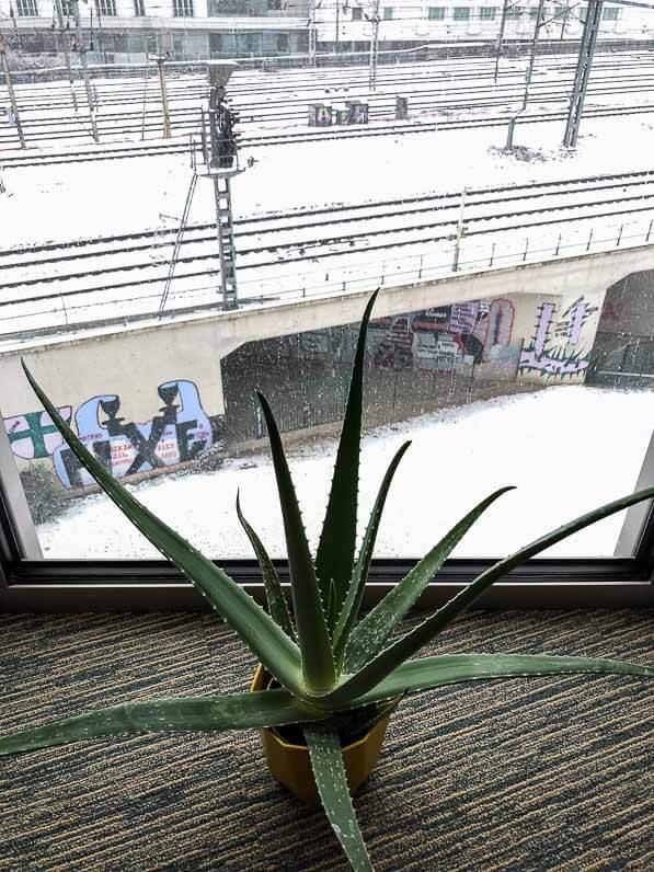 Aloe vera près d'une grande baie vitrée en hiver, Paris 19e (75)