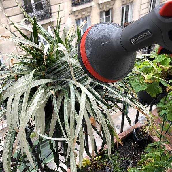 Arrosage sur mon balcon parisien en plein hiver, Paris 19e (75)