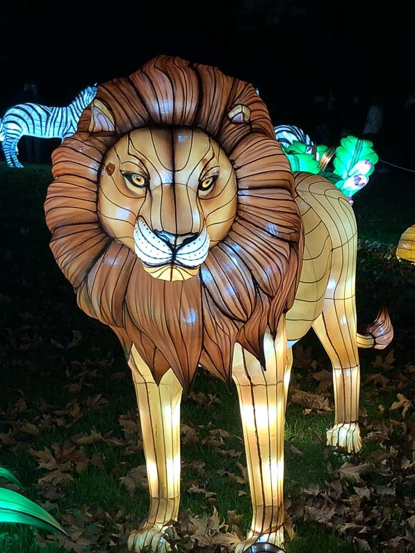 Lion, Espèces en voie d'illumination, promenade nocturne, lanternes, Jardin des Plantes, Paris 5e (75)
