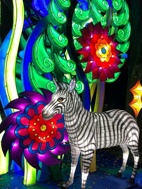 Zèbre, Espèces en voie d'illumination, promenade nocturne, lanternes, Jardin des Plantes, Paris 5e (75)