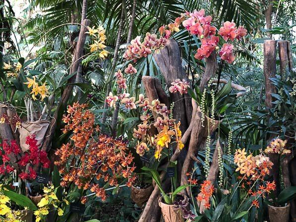 Exposition Mille et une orchidées au Jardin des Plantes de Paris ...