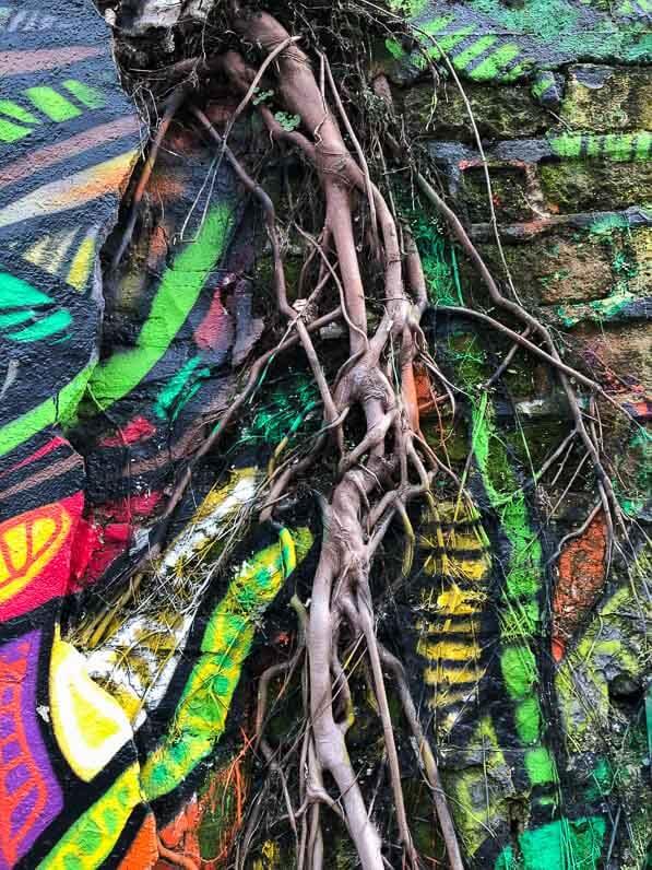 Arbre enraciné sur un mur, hors sol, rue de l'Ourcq, Paris 19e (75)