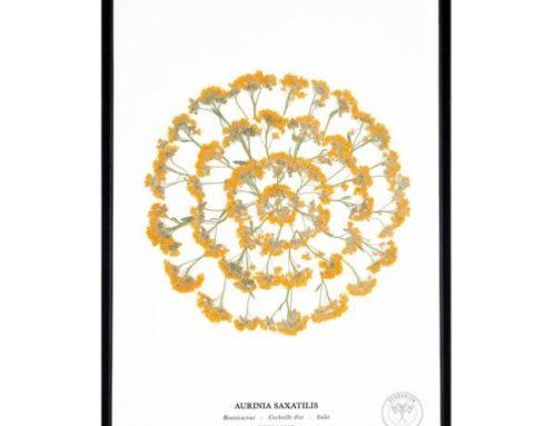Saint-Valentin : les herbiers autour de la thématique de l'amour d'Herbarium