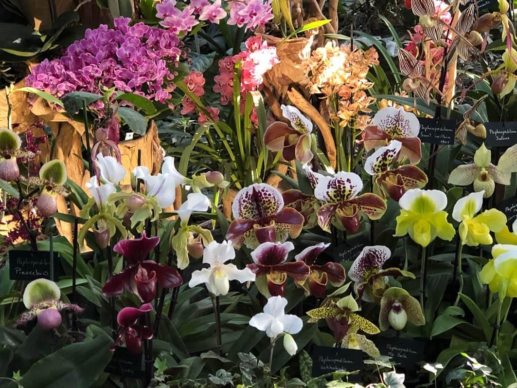 Présentation de Paphiopedilum et Phalaenopsis, Vacherot et Lecoufle, Exposition 1001 orchidées, Jardin des Plantes, Paris 5e (75)