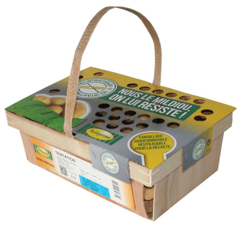 Clayette de plants de pommes de terre Actigerme, Groupe Clisson