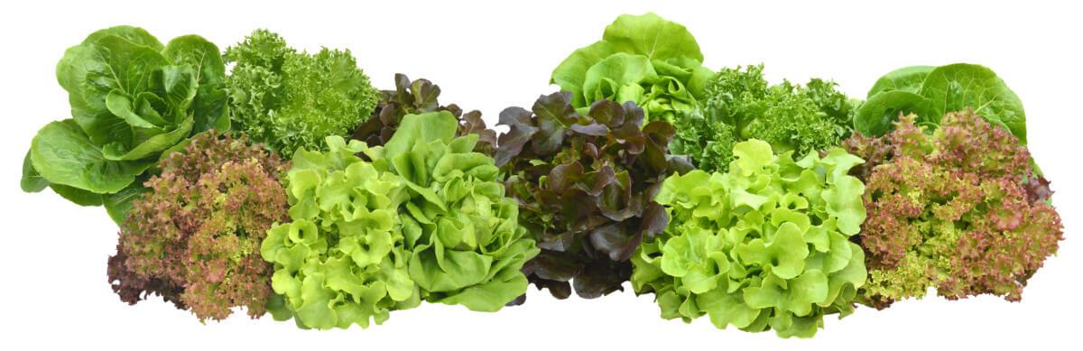 Différentes variétés de salades, photo Fotolia / nuizuke