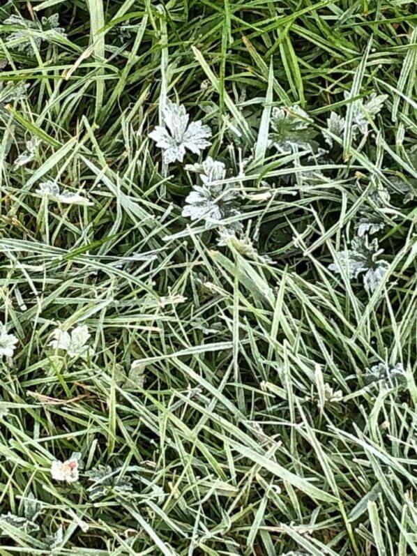 Gelée blanche sur herbe, château de Saint-Jean de Beauregard (91)