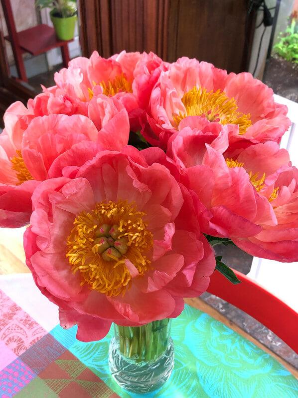 Bouquet de pivoines, fleurs coupées, Paris 19e (75)