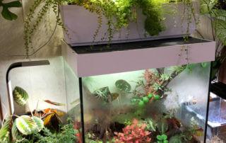 Plantes d'intérieur, terrarium, jardin d'intérieur Tregren 12 et Tregren 3, fougères, Maranta, Pteris, Adiantum,Nephrolepis, Paris 19e (75)