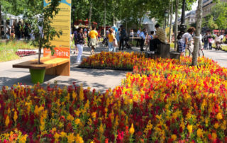 Tapis de célosies, fleurs annuelles, BiodiversiTerre, place de la République, Paris (75)
