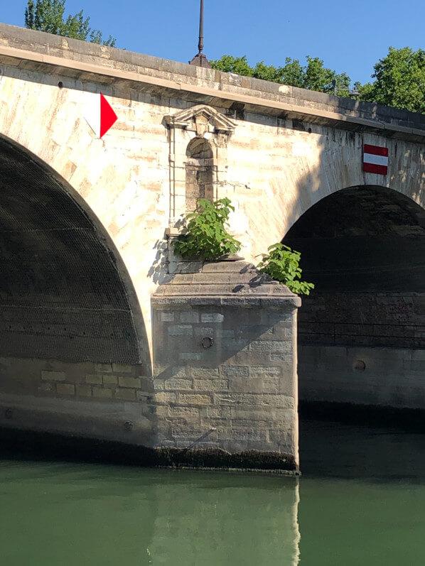 Semis spontané de Paulownia, arbre, pile de pont sur la Seine, Paris (75)
