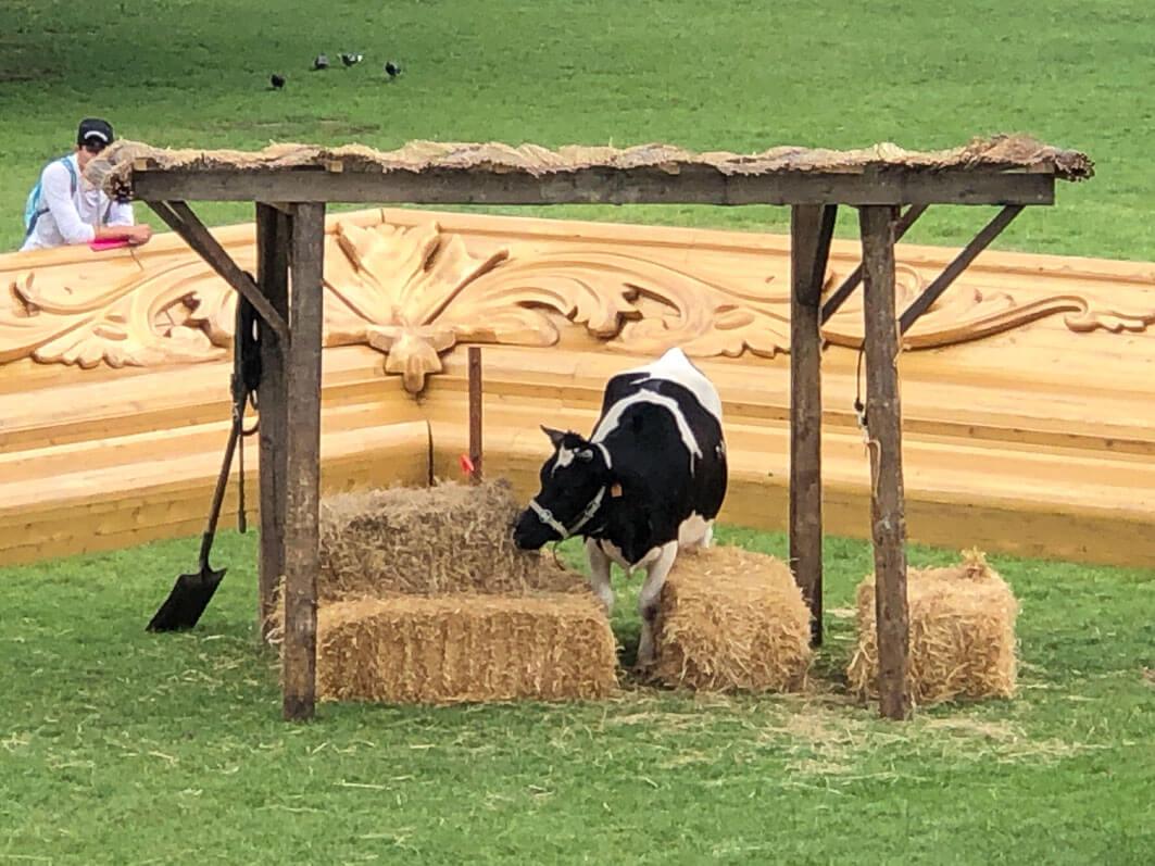 Collectif Captain Boomer, Pasture with cows, vache en été dans le parc de la Villette, Paris 19e (75)