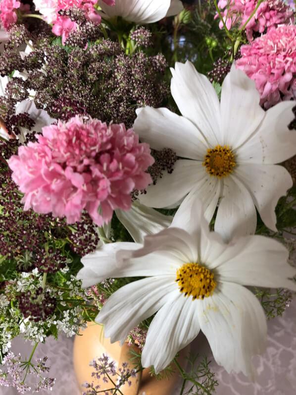 Bouquet de fleurs d'été, Cosmos, scabieuse, carotte 'Dara', coriandre, Paris 12e (75)