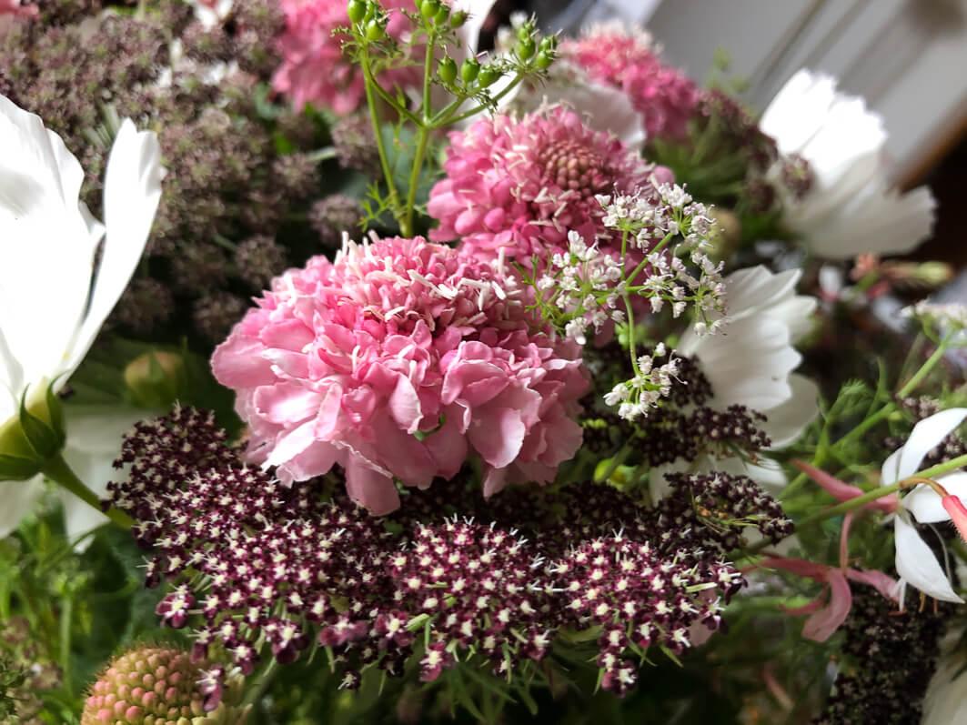 Bouquet de fleurs d'été, scabieuse, carotte 'Dara', Paris 12e (75)