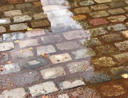 Pluie et fraicheur bienvenues après la canicule