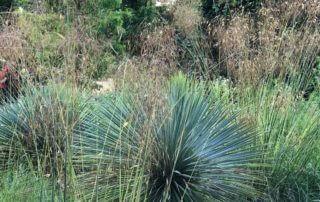 Yucca et stipe géante, Festival International des Jardins, Chaumont-sur-Loire (41)