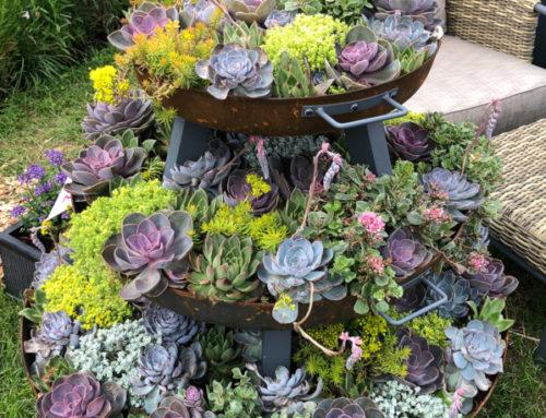 Une idée de mini jardin de cactées et autres plantes succulentes