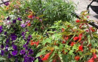 Jardinières d'été très fleuries, Annecy (74)