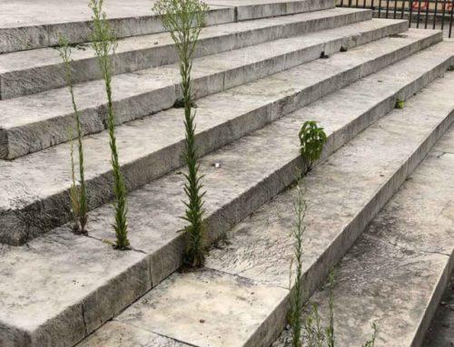 Le moindre interstice permet aux plantes sauvages de pousser
