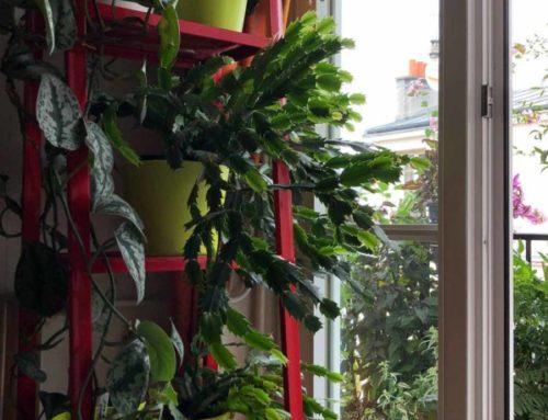 Mon étagère pour cactus de Noël