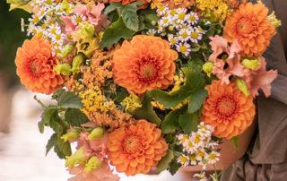 Bouquet de dahlias Ménilmontant, Bergamotte
