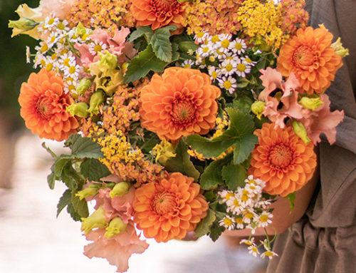 Bouquets de dahlias franciliens pour la sauvegarde des abeilles
