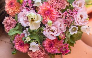 Bouquet de dahlias Montmartre, Bergamotte