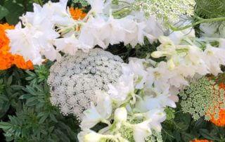 Ammi visnaga et Delphinium hybride, Annecy (74)