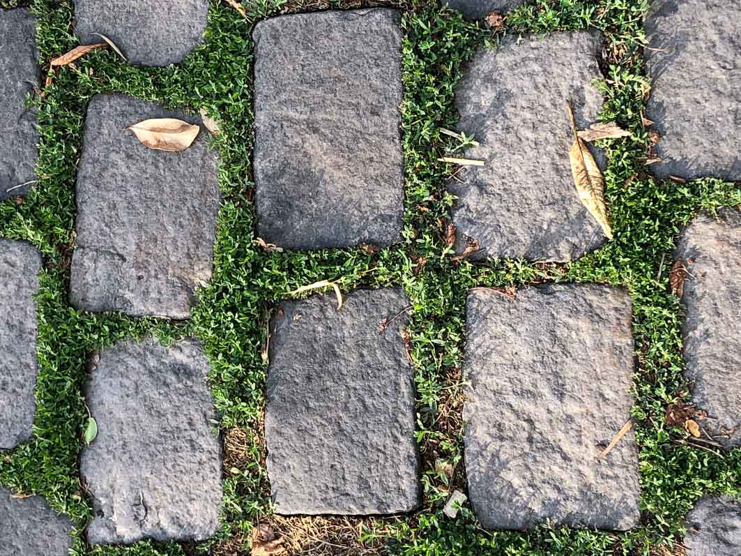 Herbes et mousses entre des pavés, Paris 16e (75)