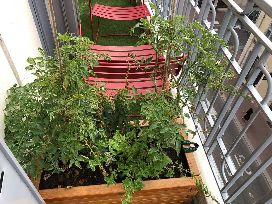 Jardinière de tomates, hôtel Mercure, Annecy (74)