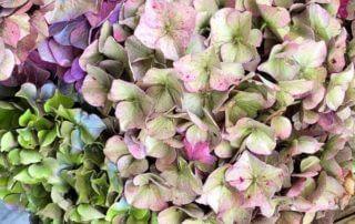 Bouquet d'hortensia, Fête des Plantes Automne, Saint-Jean de Beauregard (91)
