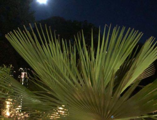 Palmier sous la pleine lune