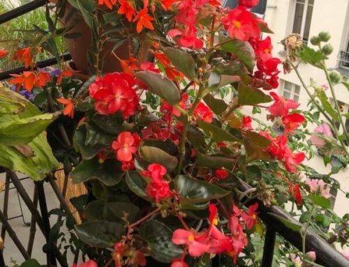 Arracher pour mieux replanter, le dilemme de l'automne