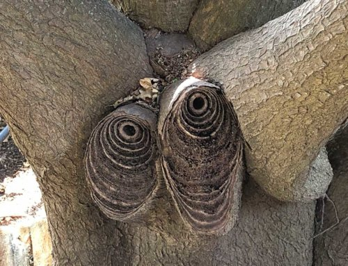 Quand un arbre semble vous regarder